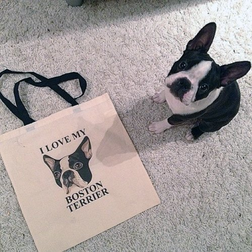 iron on transfer dog photo bag
